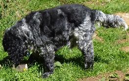 Bobbytails Dog Training